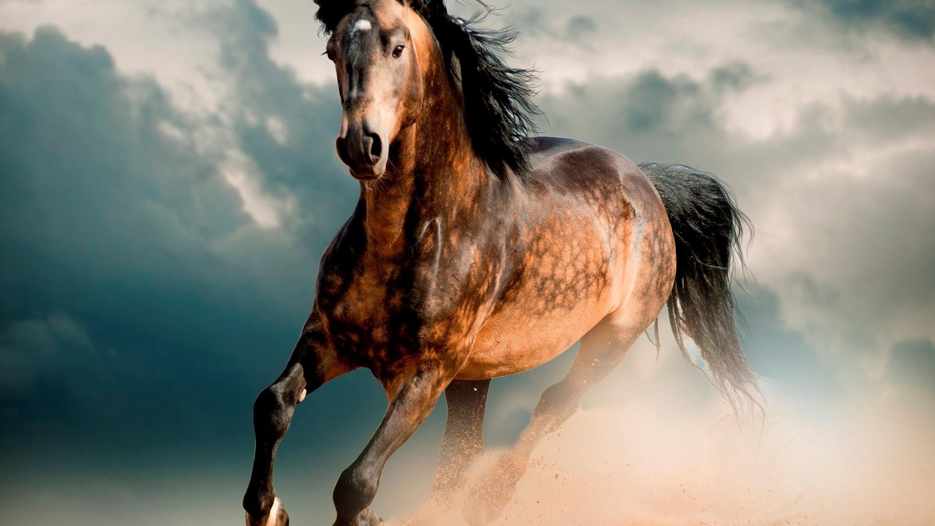 Посещение конюшен и катание на лошадях