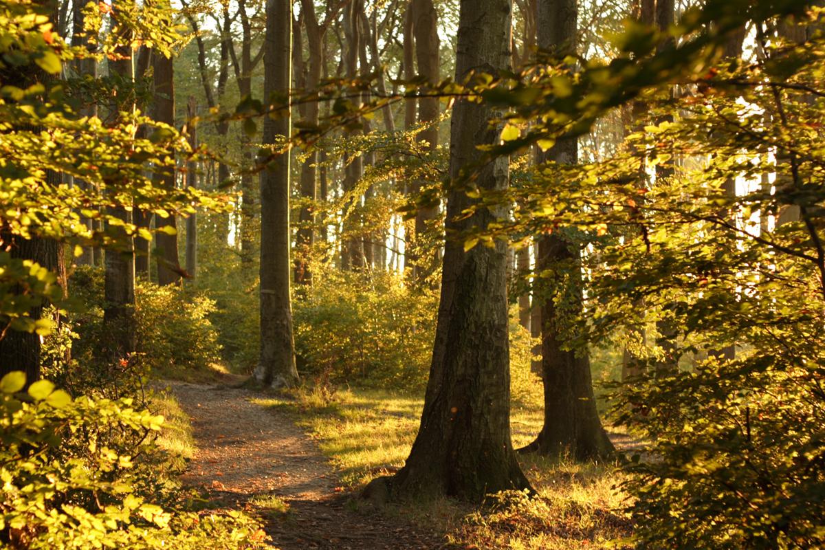 Венский лес