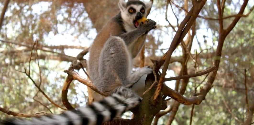 Зоопарк Натура Парк – Льюкский монастырь – пляж Са Калобра