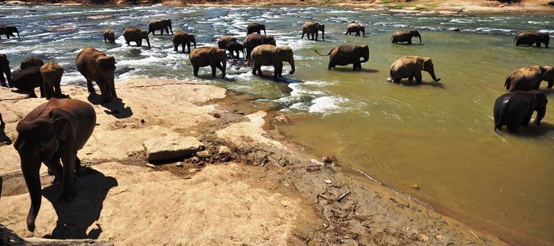 Слоновий питомник в Пиннавела