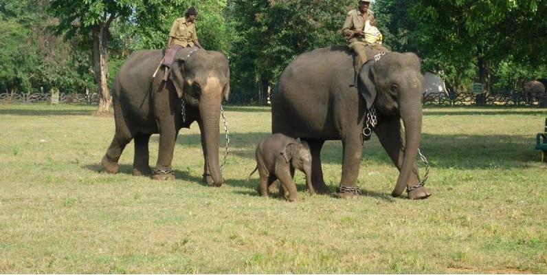 Путешествие к тиграм. Слоны. Джог Фолс. Мурудешвар.