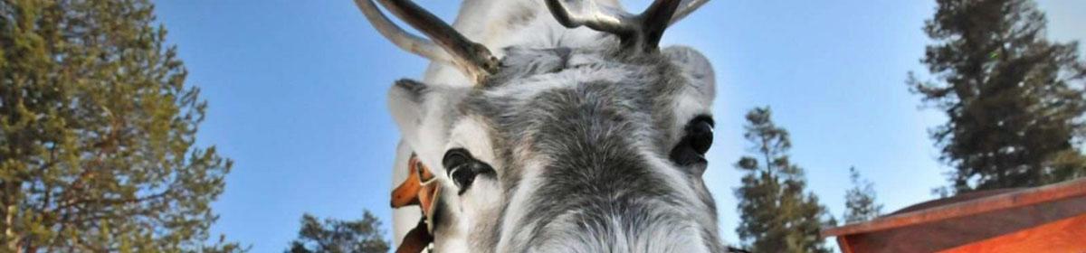 Тайны оленьего рога