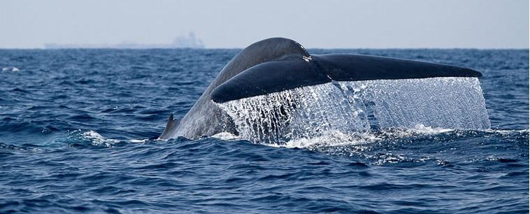 Экскурсия к китам