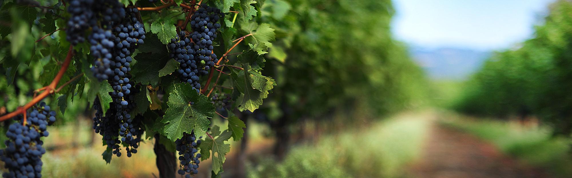 Экскурсия по Дербентской Винодельческой Компании