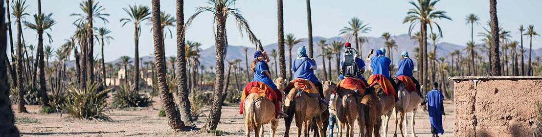 Катание на верблюдах в Марракеше