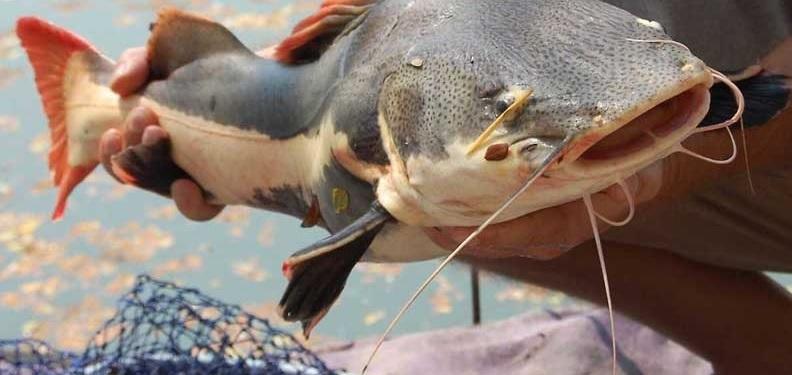 Озёрная рыбалка на Пхукете