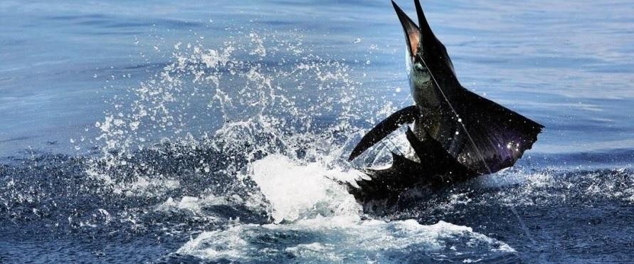 Индивидуальная рыбалка в Доминикане