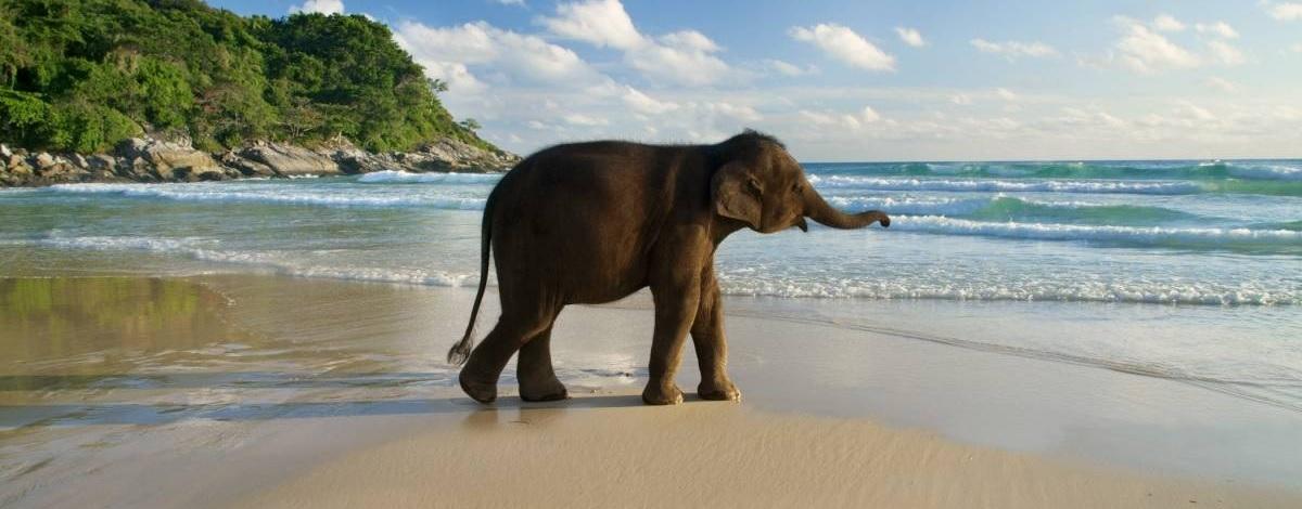 Трекинг на слонах на острове Ко Чанг