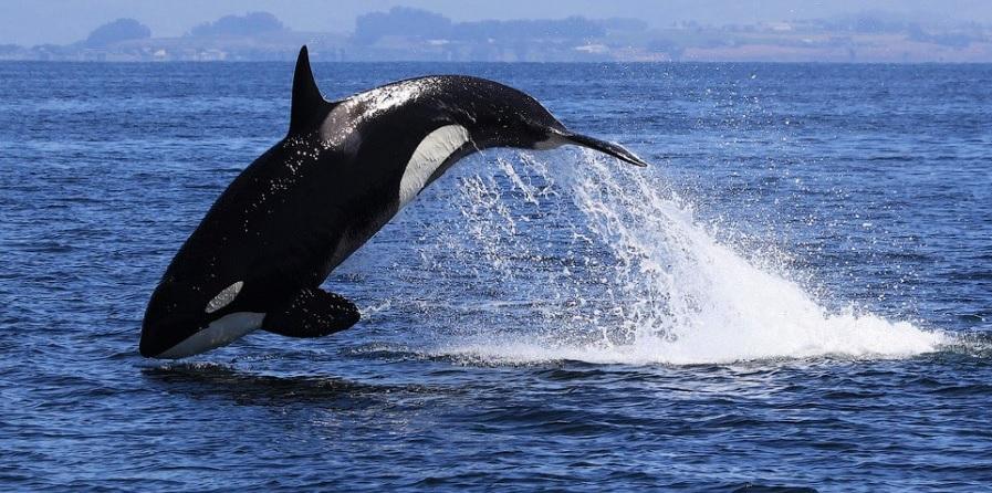 Киты, дельфины и Национальный парк Удавалаве (тур № 1067)