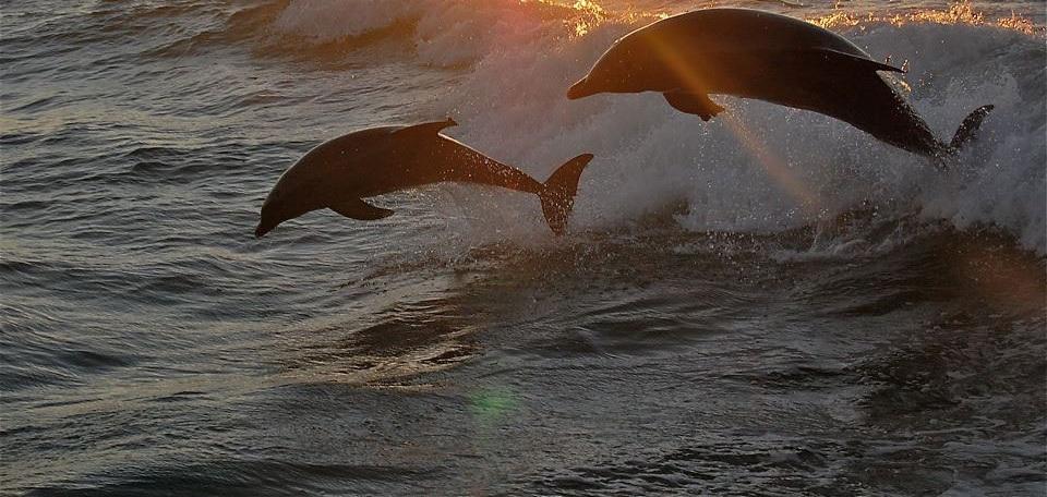 Рыбалка, дельфины, барбекю на острове