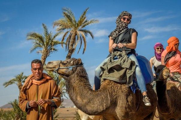 Катание на верблюдах в Агадире