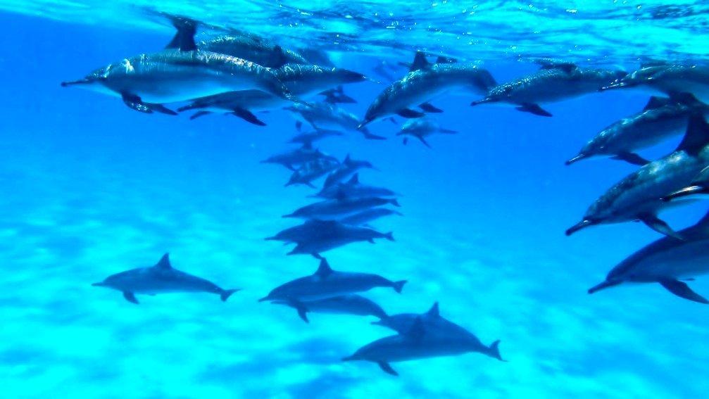 Сатайх (дом дельфинов)