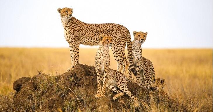 Сафари в Танзании 5 дней