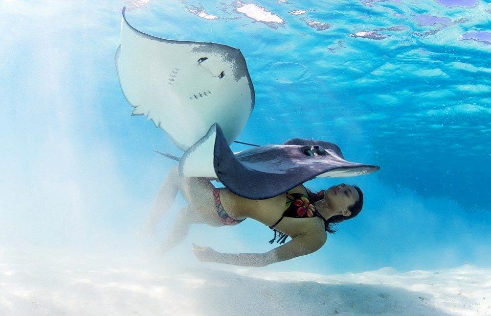 Плавание с акулами и скатами