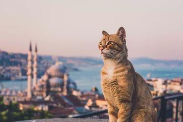 Секреты Стамбула