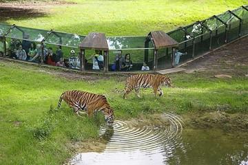 Сафари парк Туари