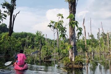 Каякинг по затопленному лесу