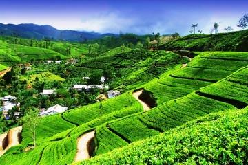 Чайные плантации и Храм Зуба Будды (тур № 751)