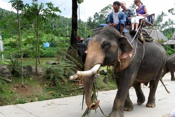 Сафари-парк и 5 шоу с животными