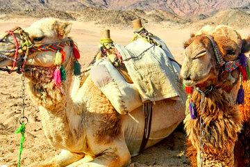 Катание на верблюдах или лошадях