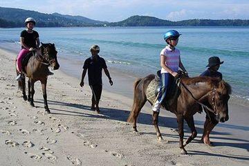 Конные прогулки на Пхукете