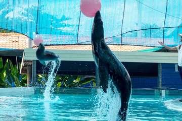 Аквариум и зоопарк на Самуи