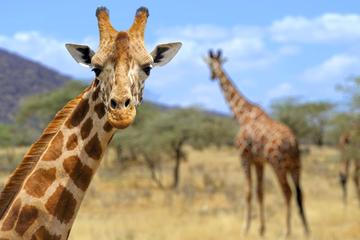 Сафари в Танзании 3 дня