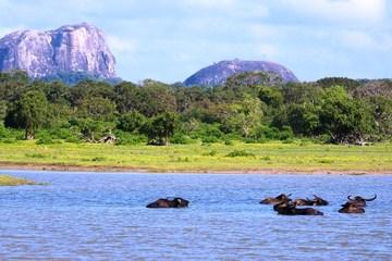 Красоты Шри-Ланки