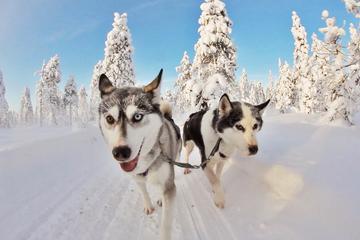 Поездка на собаководческую ферму (индивидуальная)