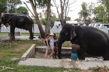 Катание на слонах, Сафари и Черепаховая ферма (тур № 729)