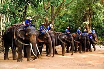 Сафари в Чианг Май