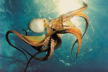 Рыбалка на осьминога