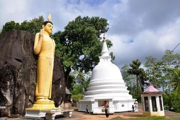 Серебряный чай, Сафари, Ятагала, Пагода Мира (тур № 880)