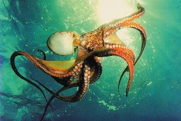 Морская прогулка с ловлей осьминогов