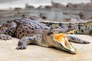 Крокодиловая ферма на Пхукете