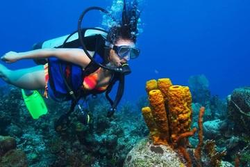 Дайвинг в Карибском море (2 погружения)