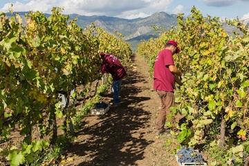 Этна и дегустация вин