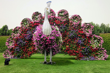 Парк цветов Miracle Garden и Тематический парк Global Village в Дубае