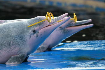 Купание и шоу с дельфинами