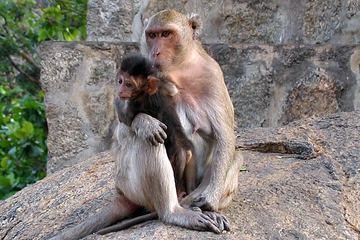 Путешествие на остров обезьян