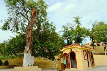 Кровоточащее дерево св.Николая Нового