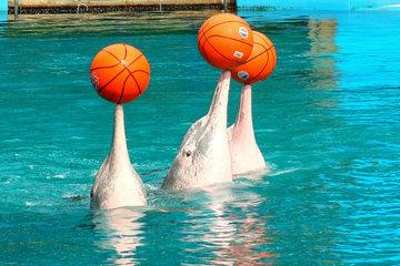 Купание с розовыми дельфинами