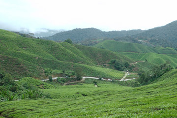 Камерон Хайлендс (Cameron Highlands)