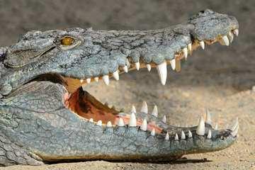 Шоу змей и крокодилов