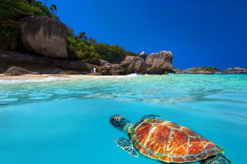 Экскурсия на Симиланские острова на 1 день