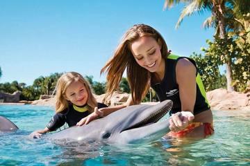 Увидеть дельфинов