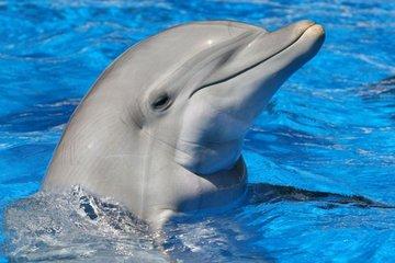 Плавание с дельфинами - Dolphin Discovery