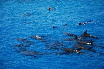 Дом дельфинов