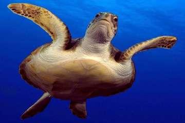 Погружение с аквалангом на Тенерифе
