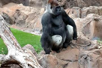Лоро Парк - мир животных и птиц